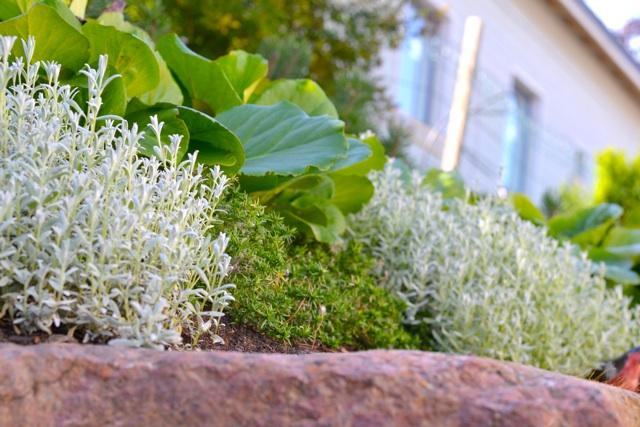 Laatu näkyy myös kasvien valinnassa.