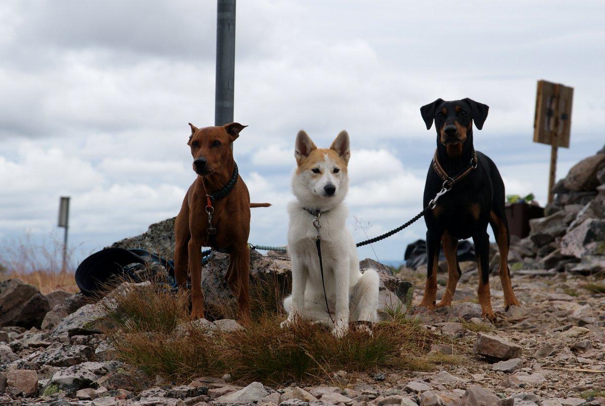 Jassu, Ruska ja Juuso Luoston huipulla.