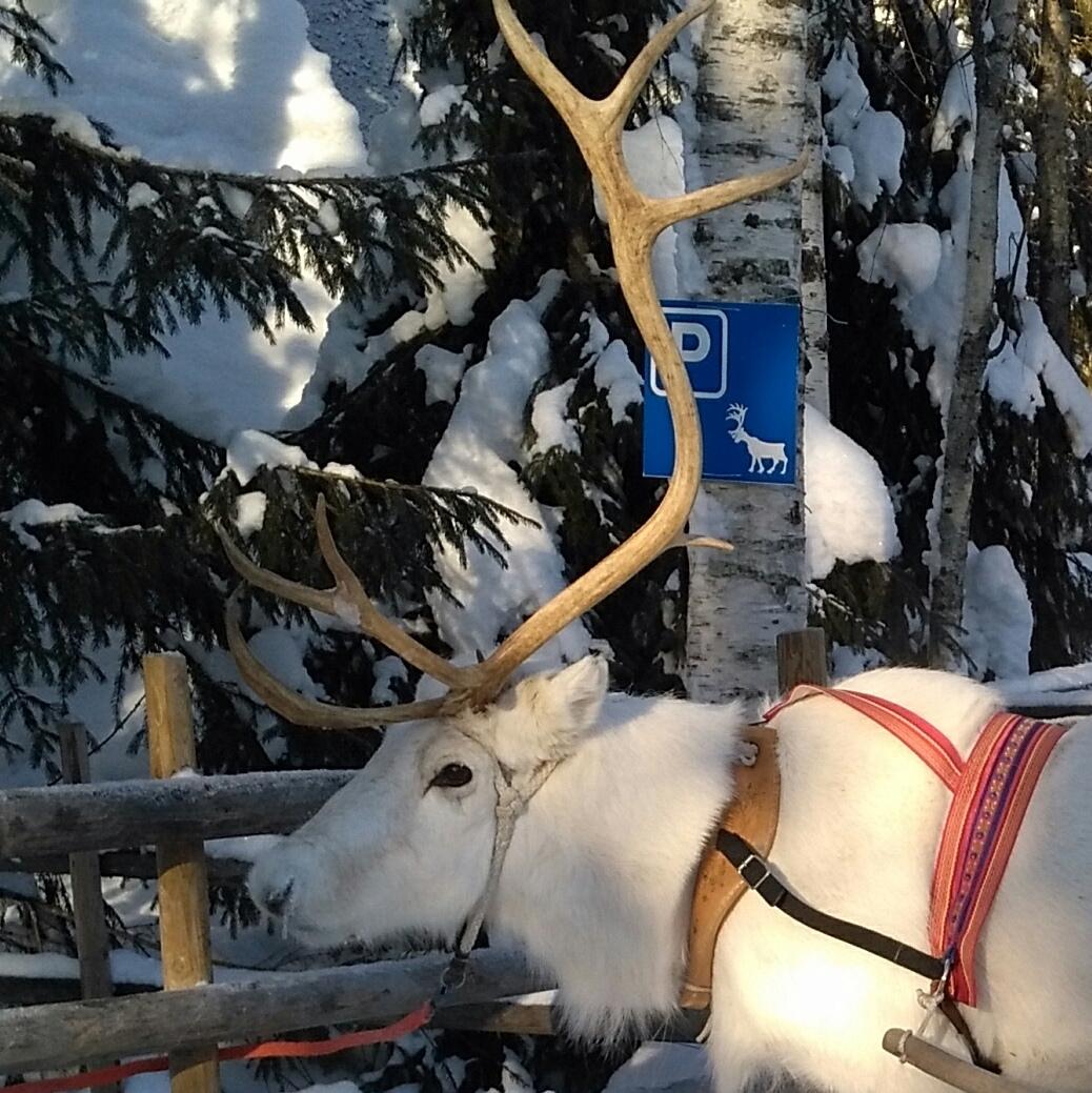 parking lot for reindeer