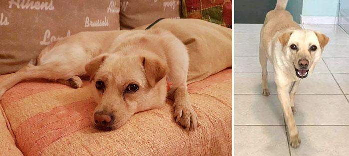 Adoptoi koira Kreetalta Hard Luck Paws yhdistyksen kautta. Kuvassa vaaleakarvainen Bella.