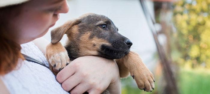 Hard Luck Paws eläinsuojeluyhdistys auttaa kodittomia eläimiä Kreetalla ja muualla maailmassa tarpeen mukaan. Adoptoi kulkukoira Kreetalta.